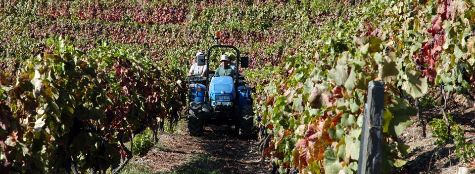2004 - Modernização das vinhas